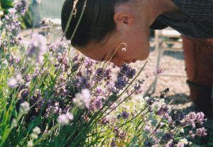 taylor lavender