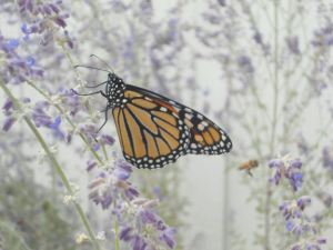 monarch2_emailver