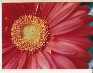 2_emailver_gerber daisy